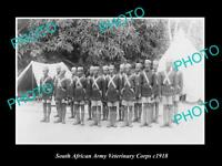 OLD POSTCARD SIZE PHOTO OF THE SOUTH AFRICAN ARMY VETERINARY CORPS c1918