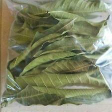 Dried Mango Leaf 100% Organic Pure From Sri Lanka