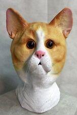 Gingembre Masque Chat Latex Minou Animal Déguisement Enterrement de Vie Garçon