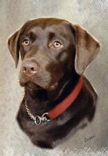 Chocolate Labrador Retriever A6 Blank Card By Starprint