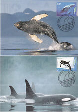 1995 AAT Antarctic Whales & Dolphins - Maxi Cards (4)