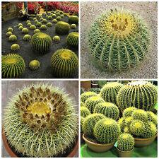 10 semi  di Echinocactus grusonii ,cuscino della suocera ,seeds cactus