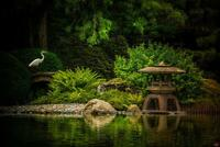 Egrets Garden by Chris Lord Photo Art Print Poster 24x36 inch