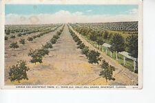 Orange and Grapefruit Trees Davenport  FL Fla