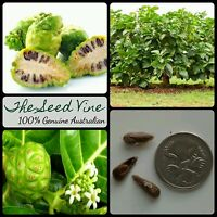 50+ ORGANIC NONI FRUIT SEEDS (Morinda citrifolia) Fruit Indian Edible Medicinal
