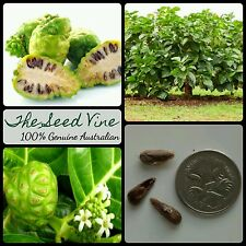 10+ NONI FRUIT SEEDS (Morinda citrifolia) Fruit Indian Mulberry Edible Medicinal
