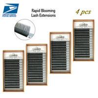 Lashview 4pcs/lot Rapid 5D/6D Lash Blooming Volume Eyelash Extensions Fast Fan