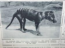 1929-ILLUSTRATED LONDON NEWS- Habibullah,Tasmanian Wolf,Lama Choni Tibet,Gliders