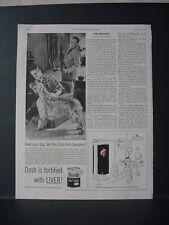 1953 English Setter Dash Dog Food Hunting Vintage Print Ad 10740