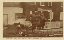 Soudersburg PA * Kreider's Pony and Dog at Home * ca. 1908 Lancaster Co.