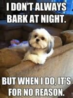I DON'T ALWAYS BARK AT NIGHT. BUT WHEN I DO, IT'S FOR NO REASON CUTE DOG MAGNET