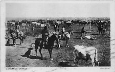B86256 marcando granado marking cattle cow horse  types folklore  argentina