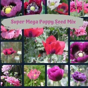 Super Mega Mix Poppy Flower Seeds 1000 plus