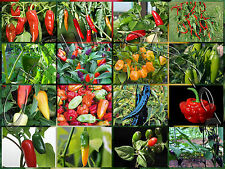 180 Semi/Seeds di PEPERONCINO PICCANTE in 18 VARIETA' BULK Seeds