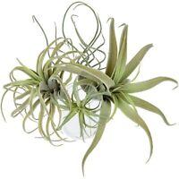 4Pack KüNstliche Ananas Gras Luft Pflanzen GefäLschte Blumen Faux Flocking  C7D2