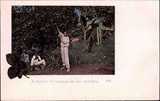 Antillen Antilles Karibik Caribbean ~1900 Dawest of Oranges Einheimische Ethnic