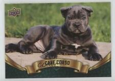 2018 Upper Deck Canine Collection Puppy Variant Cane Corso #340 ob6