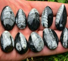 Orthoceras Fossil Pear-Drop palmstone Shellfish Pendant Ammonite Flash Sale ✔UK✔