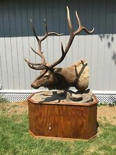 Elk Head Mount Taxidermy with Base - Local Pickup Only