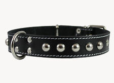 "Genuine Leather Dog Collar Studs 1.25""wide 15""-19"" neck size Amstaff Retriever"
