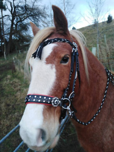 Bitless Baroque sidepull Bridle.Portuguese Spanish ALL SIZES FREE POST