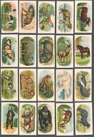 1916 C40 Animals Series Tobacco Cards Complete Set of 60
