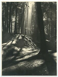 Photo Beautiful Printing Trees Lumière - Forest Magic - Nature Landscape 1930