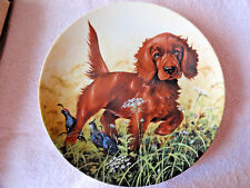 Knowles Plate Missing the Point Irish Setter Third Issue Field Puppies w Papers