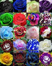 100 seeds - RARE ROSE FLOWER SEEDS 20 DIFFERENT VARIETIES 5 SEEDS EACH