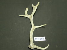 Fallow Deer Antler for Crafts Scrimshaw Chandelier Home Cabin Office Af0415