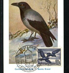 AUSTRIA Maxi-Card BIRDS Bregenz Bodensee 1955 Illustrated {samwells-covers}MA866