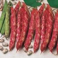 Seeds Giant Beans Borlotto Bush Organic Heirloom Russian Ukraine