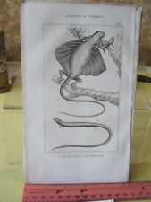 Vintage PRINT,REPTILE,1836,Comte De Lacepede, p1088