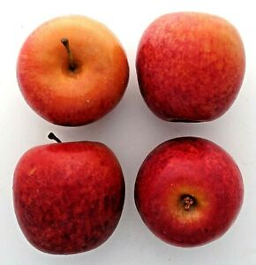 """lot of 4 red lifesize 3"""" artificial fake  apples realistic"""
