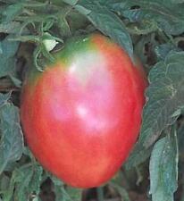 Anna Russian Tomato Seeds