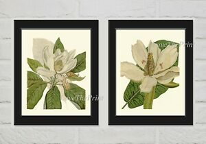 Unframed White Magnolia Botanical Wall Art Print Set 2 Antique Tree Flower Decor