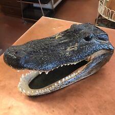 """Vintage Alligator Taxidermy 10"""" Alligator Head with Glass Eyes."""