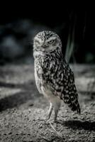 Owl by Chris Lord Photo Art Print Poster 24x36 inch