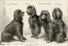 More details for irish water spaniel antique engraved print 1892 owner col hon. w. le poer trench