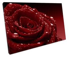 Rosa de Agua Rojo Oscuro LONA pared arte Foto Grande 75 X 50 Cm