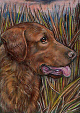 Hot Summer Sale! Beautiful Chesapeake Bay Retriever Aceo print by Anne Hier