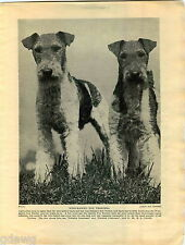 1930 Book Plate Print Dog Wire Haired Fox Terrier Skye Griffon Bruxellois