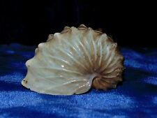 ONE (1) BROWN PAPER NAUTILUS  SEA SHELL DECOR CRAFT  TROPICAL
