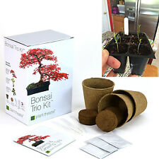 Bonsai Tree Starter Kit Indoor Plant Seeds Pots Peat 3 Distinctive Trees To Grow