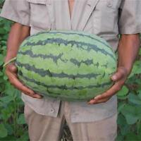 Eg _ Zimmerantenne 50 Pcs Riesig Wassermelone Samen Delicious Sweet Frucht-