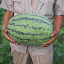 PT_ Cn _ 50 Pcs Gigante Anguria Semi Deliziosi Frutta Dolce Decorazione da Gia