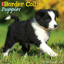 Just Border Collie Puppies(dog breed calendar) 2021 Wall Calendar(Free Shipping)