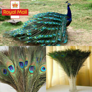 """50Pcs Peacock Tail Feathers Natural 10-12"""" For Wedding Craft Arts DIY Home Decor"""