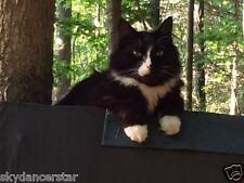 Sponsor In Memory Of Sebastian Rainbow Bridge Cat Rescue Donation Rec Photo