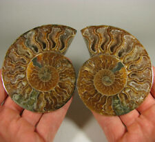 "3.5"" AMMONITE FOSSIL Split Polished Pair w/ Calcite Chambers - Madagascar"